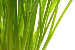 Frische grüne Schnittlauche stockfotografie