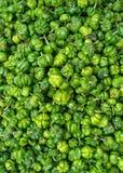 Frische grüne spanische Pfeffer stockfoto
