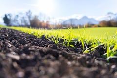 Frische, grüne und fruchtbare agricutlure Anlagen, Gras stockfotos