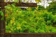 Frische Grünpflanzen mit Holzrahmen lizenzfreies stockbild