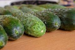 Frische gr?ne Gurken Vegetarische Nahrung Gurke enth?lt Vitamine B, A lizenzfreies stockbild