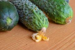 Frische gr?ne Gurken Vegetarische Nahrung Gurke enth?lt Vitamine B, A lizenzfreie stockfotos
