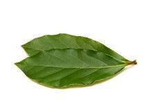 Frische Green Bay-Blätter Lizenzfreies Stockbild