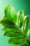Frische Grünblätter Lizenzfreie Stockbilder