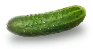 Frische Gurke auf Weiß Stockbild