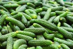 Frische Gurken im Supermarkt Stockfotografie
