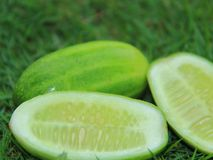 Frische Gurkenfrucht gurke Lizenzfreies Stockfoto