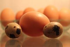 Frische Hühner- und Wachteleier kochfertig Stockfotos