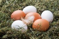 Frische Hühnereien auf Stroh auf dem Bauernhof Rustikale Art stockfotos