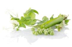 Frische Hülse der grünen Erbse Stockbild