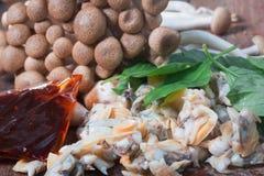 Frische Herzmuschel vom Meer von Thailand und von Shimichi vermehrt sich explosionsartig Lizenzfreie Stockfotografie