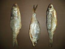 Frische Hinterwelle des Trockenfisches drei stockfoto