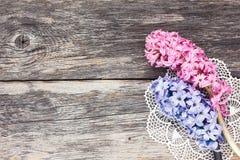 Frische Hyazinthenblumen auf gealtertem hölzernem Hintergrund Beschneidungspfad eingeschlossen Lizenzfreies Stockfoto