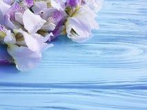 Frische Irisblume auf einem blauen hölzernen Hintergrund Lizenzfreies Stockbild