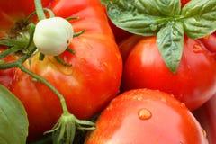 Frische Jersey-Tomaten Lizenzfreies Stockbild