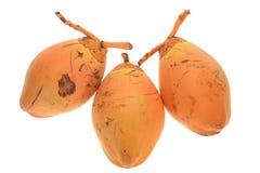 Frische junge Kokosnüsse Lizenzfreies Stockfoto