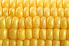 Frische Körner von Mais und von Tau stockfotos