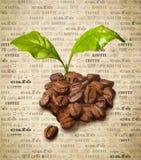 Frische Kaffeebohnen Lizenzfreies Stockbild