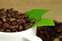 Frische Kaffeebohnen stockbild