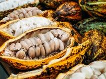 Frische Kakaobohne-und Hülsen-Frucht Lizenzfreie Stockbilder