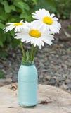 Frische Kamillenblumen Lizenzfreie Stockfotos