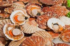 Frische Kamm-Muscheln am Fischmarkt Lizenzfreies Stockbild