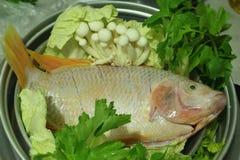 Frische karminrote Fische mit roter Farbe Lizenzfreie Stockfotografie
