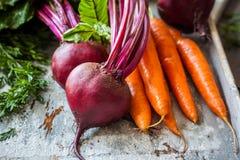 Frische Karotte und Rote-Bete-Wurzeln stockfotos
