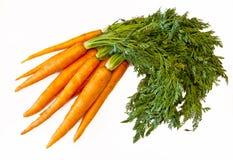 Frische Karotten Lizenzfreies Stockfoto