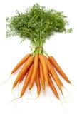 Frische Karotten des Bündels Stockfotografie