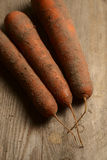 Frische Karotten hoch im sandigen Boden stockbild