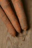 Frische Karotten hoch im sandigen Boden stockbilder