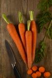 Frische Karotten hoch im sandigen Boden stockfotos