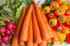 Frische Karotten, lettus, grüner Pfeffer und Rettiche Stockbild