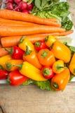 Frische Karotten, lettus, grüner Pfeffer und Rettiche Stockfotos