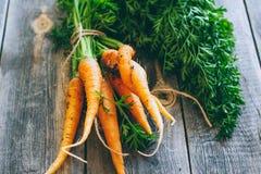 Frische Karotten mit grünen Oberseiten Stockbild