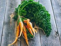 Frische Karotten mit grünen Oberseiten Lizenzfreies Stockfoto