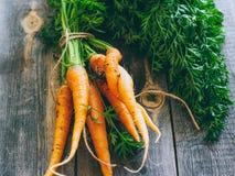 Frische Karotten mit grünen Oberseiten Stockfoto