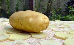 Frische Kartoffel Stockfotografie
