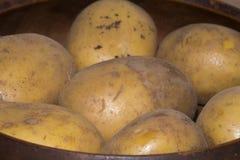 Frische Kartoffel vom Landwirt #3 Stockfotos