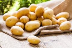 Frische Kartoffeln des Bauernhofes auf einem Sack des groben Sackzeugs stockfotografie