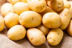 Frische Kartoffeln des Bauernhofes auf einem Sack des groben Sackzeugs stockbild