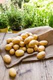 Frische Kartoffeln des Bauernhofes auf einem Sack des groben Sackzeugs lizenzfreies stockfoto
