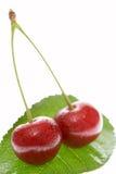 Frische Kirschen auf einem Blatt Stockfoto