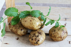 Frische kleine Frühkartoffeln mit Minze Stockbild