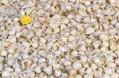 Frische Knoblauchzehen im Markt Stockbilder