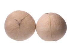 Frische Kokosnüsse getrennt Stockfotografie