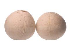 Frische Kokosnüsse getrennt Stockbilder