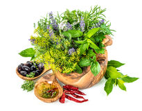 Frische Kräuter und Gewürzdill, Basilikum, Salbei, Lavendel, Lorbeer, oliv stockbilder