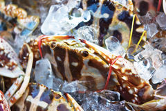 Frische Krabbe auf Eis am Landwirtmarkt Stockfoto